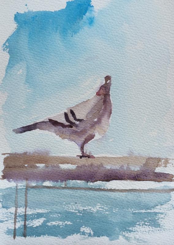 Resting racing pigeon