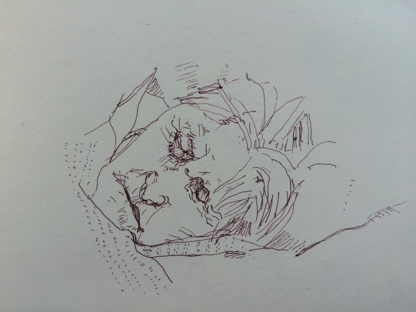 Mam Sepia Pen Sketch Sleeping